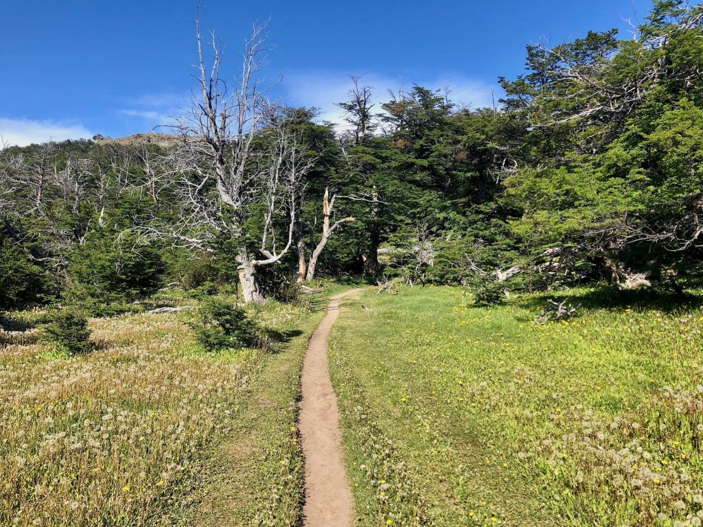 Löwenzahnfeld mit Pfad auf dem Weg zum Loma del Pliegue Tumbado.