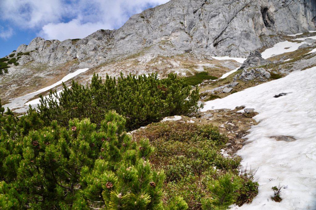 Sonst keine Wandergruppe in Sicht: Aufstieg zum Tauernkogel.