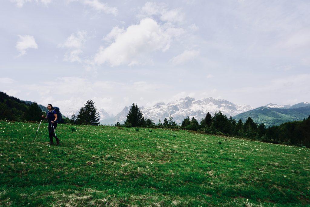 Eine grüne Wiese mit einem Trekker, Nadelbäumen und einem schneebedeckten Gebirge im Hintergrund.