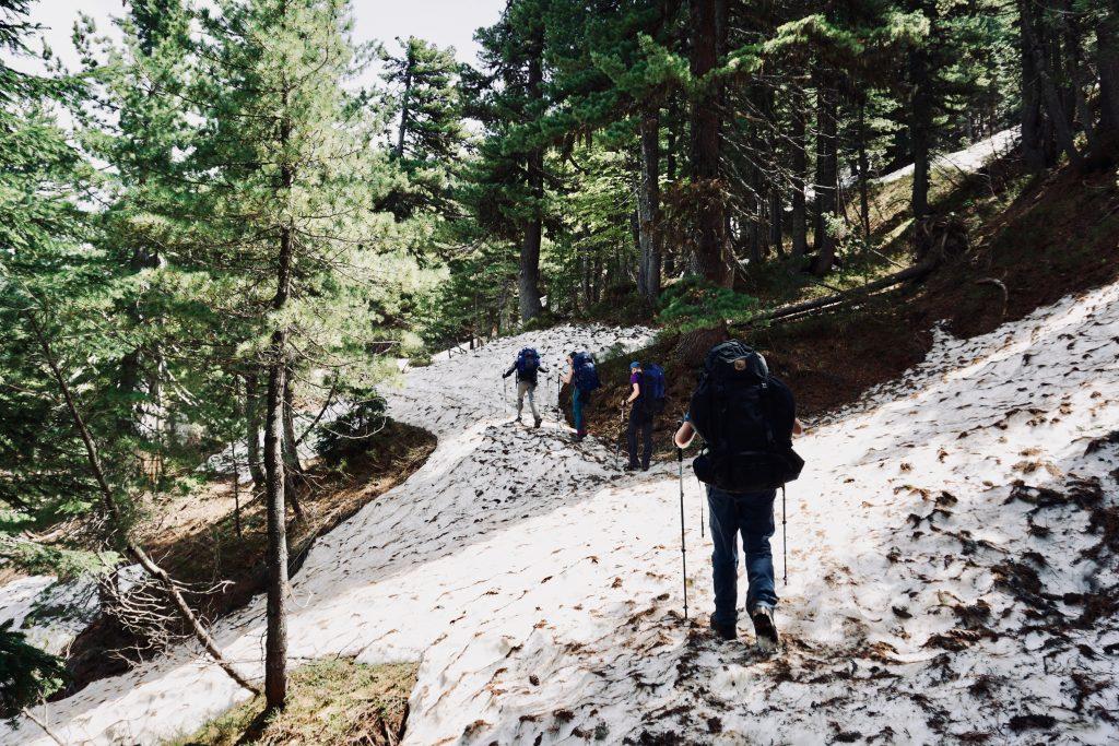 Ein schneebedeckter Weg inmitten von Nadelgehölzern und Trekkern.